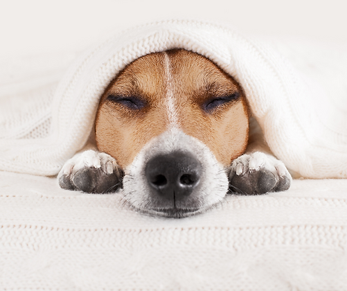 Kurs Petsitting i dogwalking - kompleksowa opieka nad zwierzętami domowymi