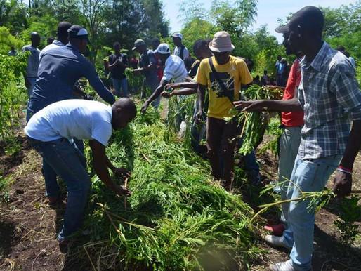 Cinq (5) aptitudes à acquérir en stage de formation au Jardin Botanique des Cayes (JBC)