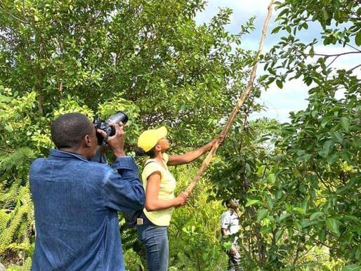 Mouvement zéro extinction de la flore haïtienne