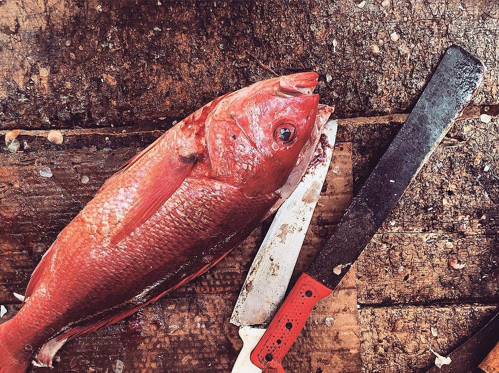 Pescado antes de ser pescado a la talla