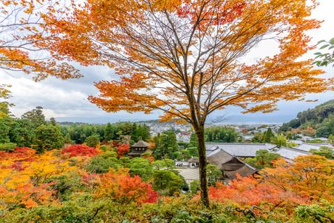 JAPÓN: Postales otoñales