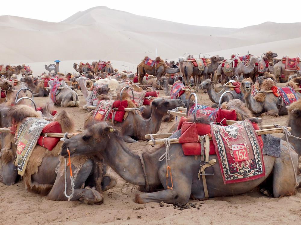 Caravana de cammelos en Dunhuang