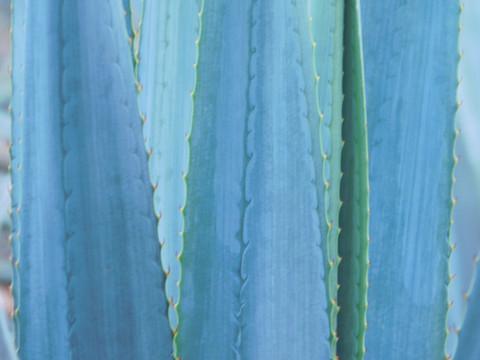 JALISCO: Por el camino azul…