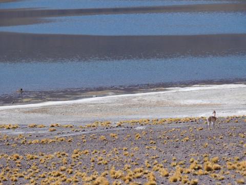 CHILE: San Pedro de Atacama ♥