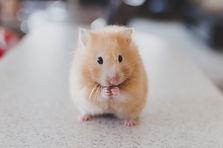animal-cute-pet-fur-small-mammal-1078976