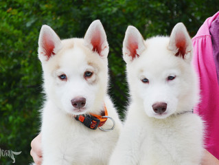 Искам куче? Как да го избера?