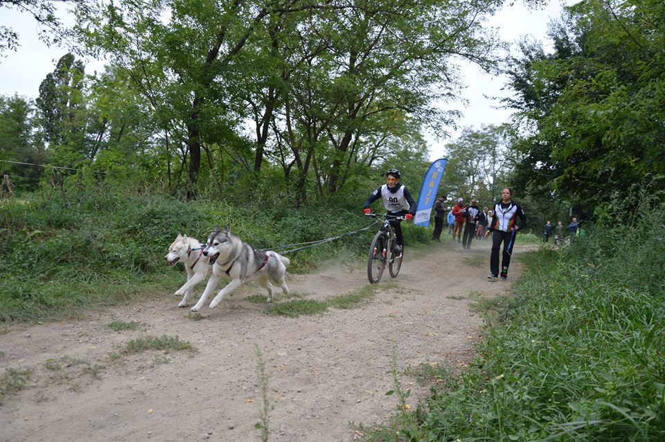23rd sleddog weekeng in HU