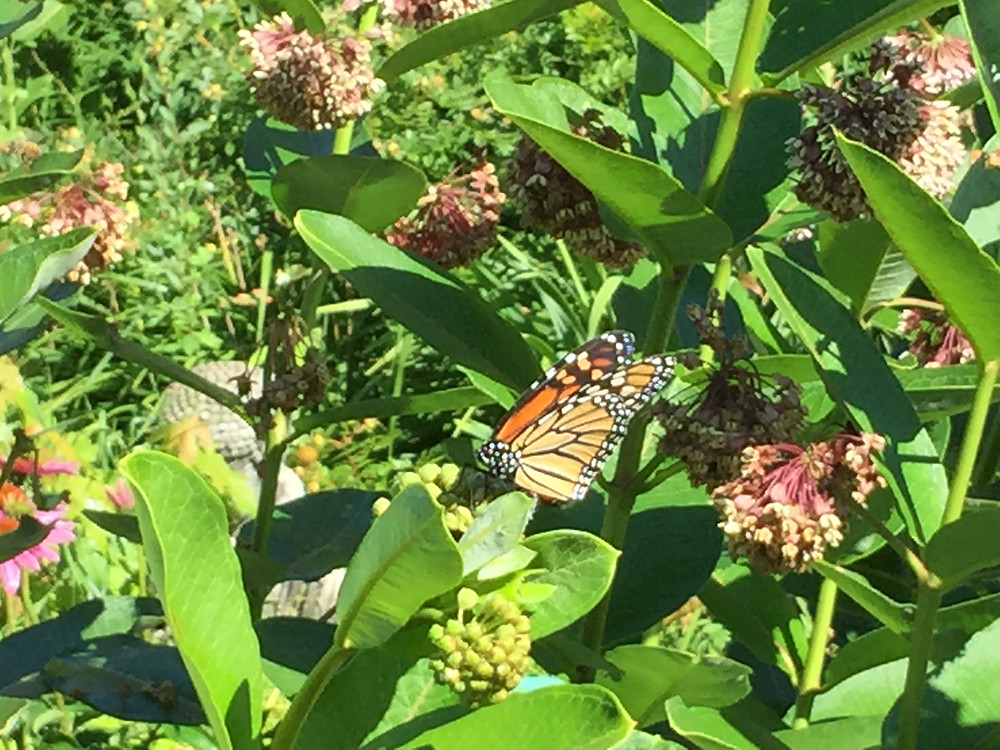 Monarch of the Yard
