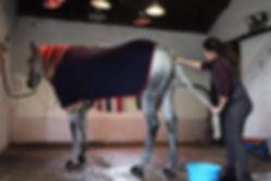 horse care.jpg