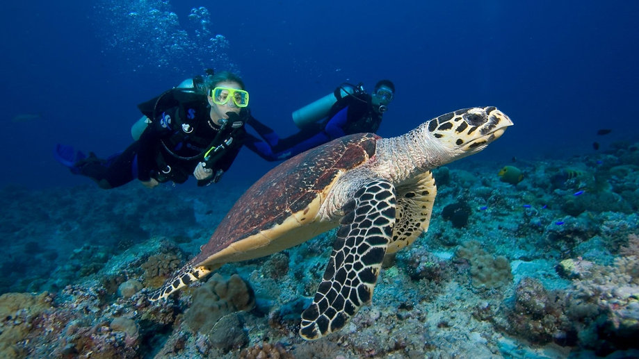 scuba-diving-gold-coast-australia-turtle