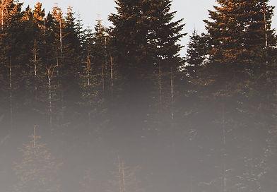 pexels-efdal-yildiz-917494_edited.jpg