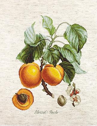 BA22450 Abricot-Peche - Kit de Punto de Cruz Luca-S