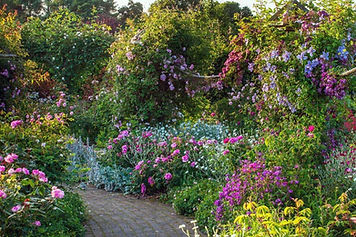 Rosemoor. A well established border of flowers and shurbs, heavy with blossoms in pink and purple.