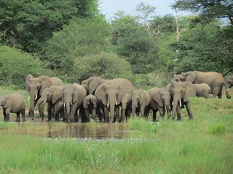 Elephants Kruger Park | Sentashya Safaris