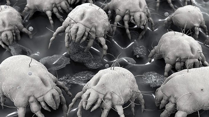 A Heated Mattress Cover That Zaps The Dust Mites In Your Bed… Say What!?