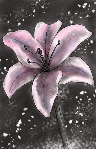 Watercolour Lily