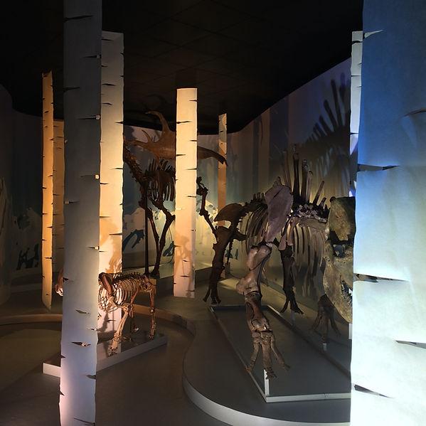 Espace Continuum - Scénographie d'exposition - Muséum d'histoire naturelle - Toulouse
