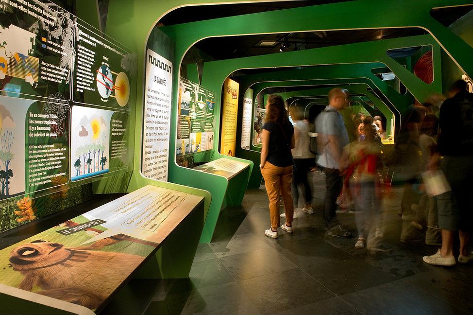 Les As de la jungle - Scénographie d'exposition - Muséum d'histoire naturelle - Toulouse