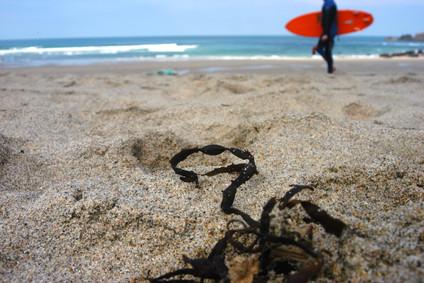 Seaweed & Surfer