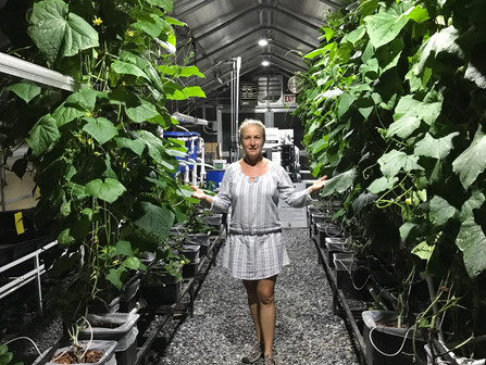 Hydroponics, Soilless Growing