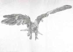 Black Shouldered Kite II, 1982