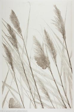 Marsh Reeds III, 2006