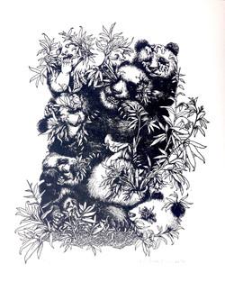 Pandas and Babies, 2013