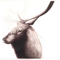 """""""Elk"""", 2005"""