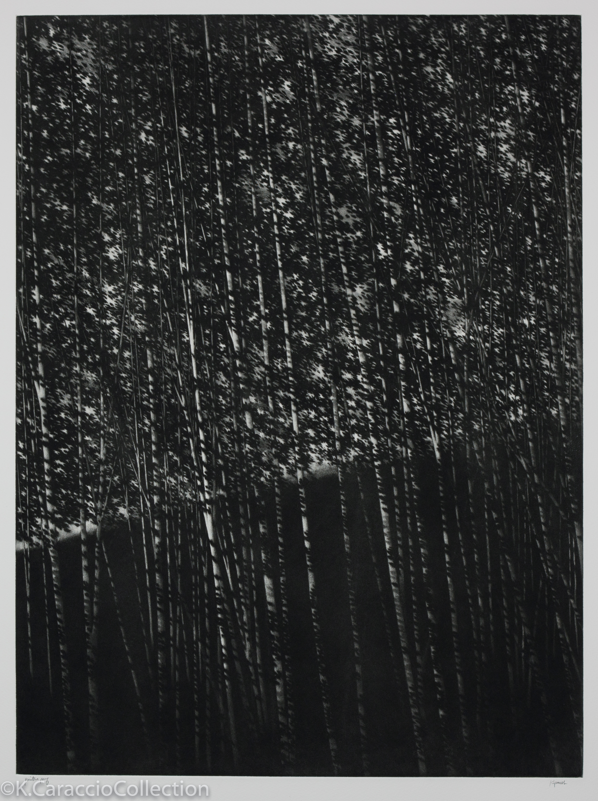 The White Forest, 2000