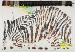 Zebras, 1985