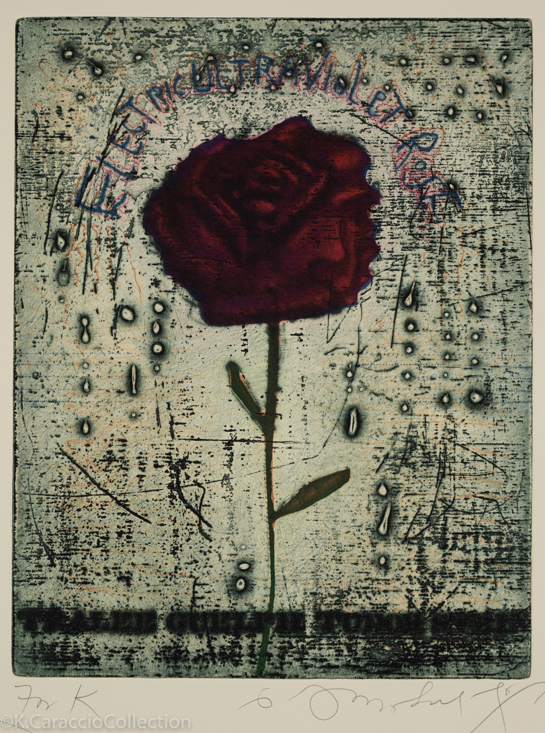 Electroviolet - Rose, 1975