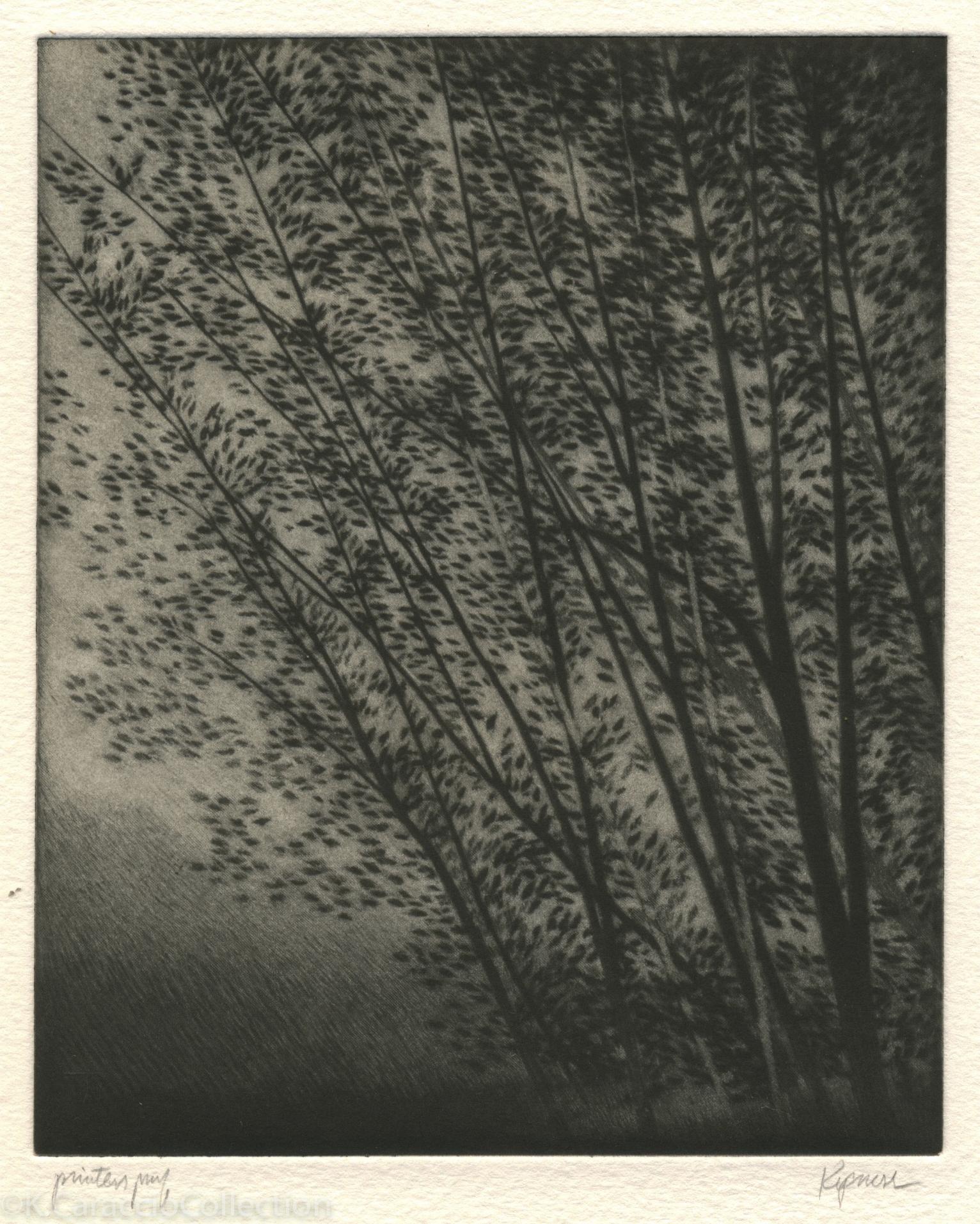 Two White Trees, 1997