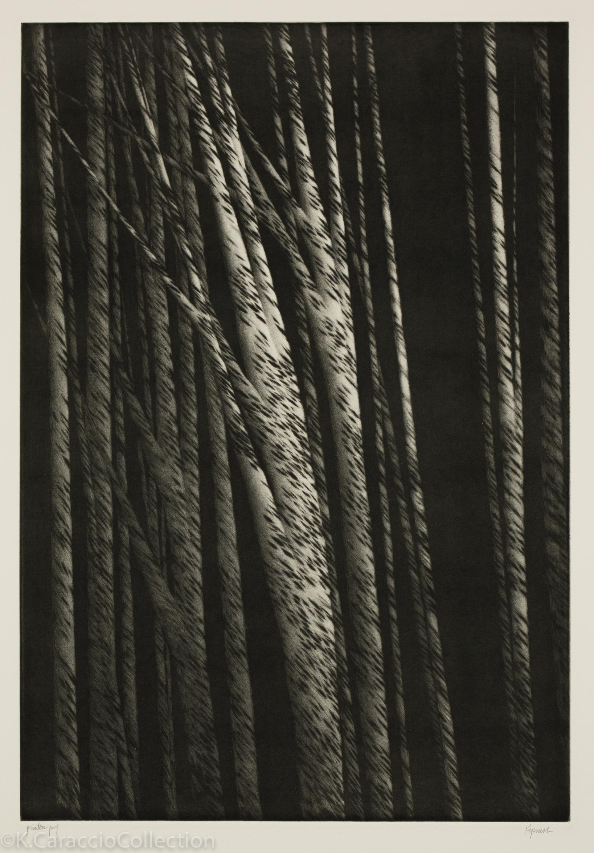 Tall Trees at Night, 2001