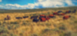 Life Coaching Cowboy Moving Cattle