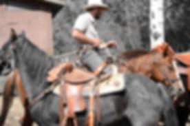 Life Coach Cowboy leading horses.