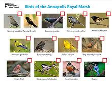 Bird photo check list.jpg