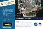 Chain Pickerel ID Card - 2020 Updated Ap