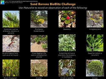 BioBlitz sandbarrens challenge.001.png