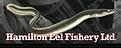 Hamilton Eel Fishery.png