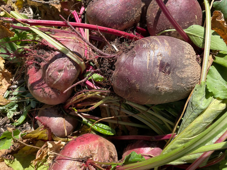7 ways with beetroot