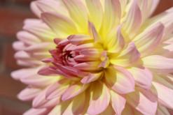 Telle une fleur qui s'ouvre