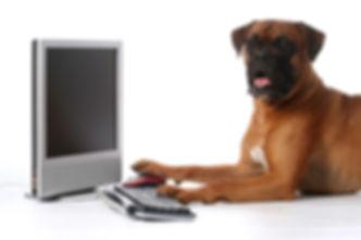 Dog-on-Computer.jpg