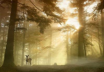 Bambi-1.jpg