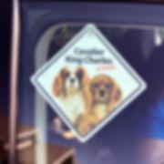 dogsonboard_edited.jpg