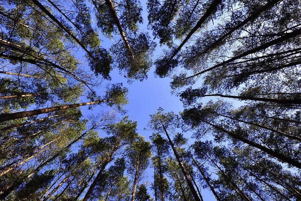 landscape nature sky spring
