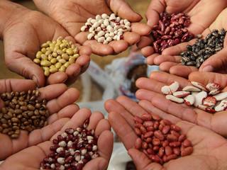 L'échange de graines - 5 mars à la Touvière