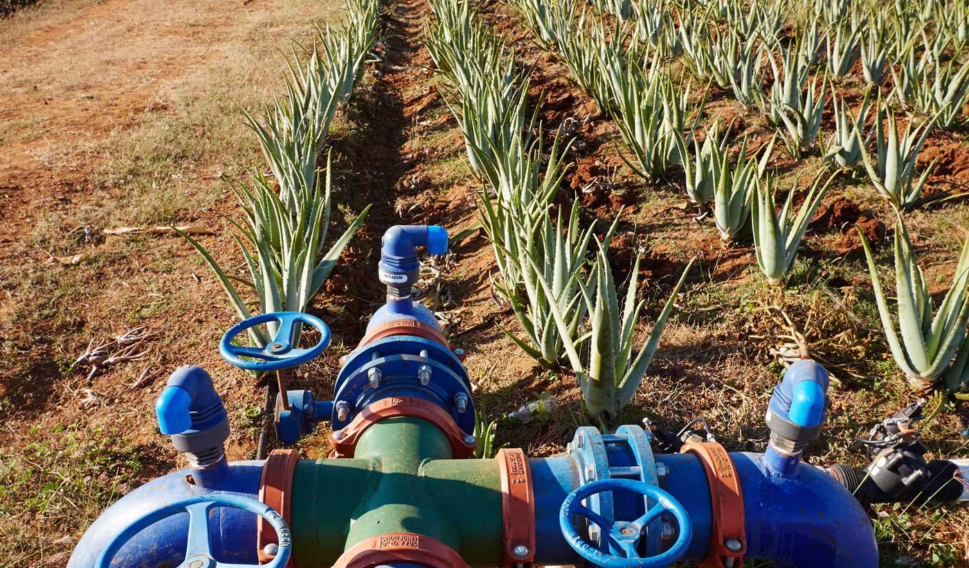 irrigation champ d'aloe forever