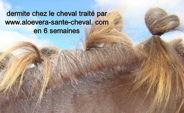 dermite-cheval-aloevera.jpg
