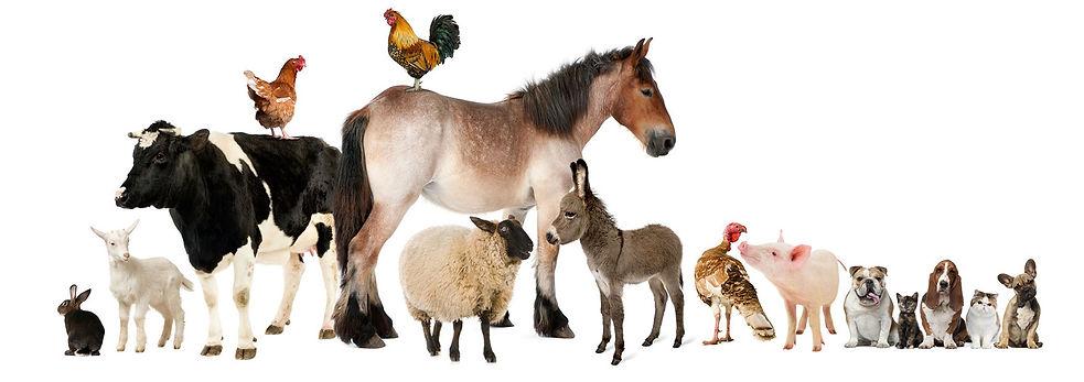 cropped-garde-tous-animaux1.jpg