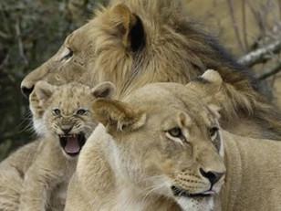 O papel da família na prevenção da homossexualidade
